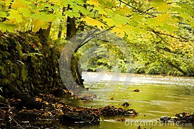 Fall foliage on trees along banks of river through forest on sunny day.