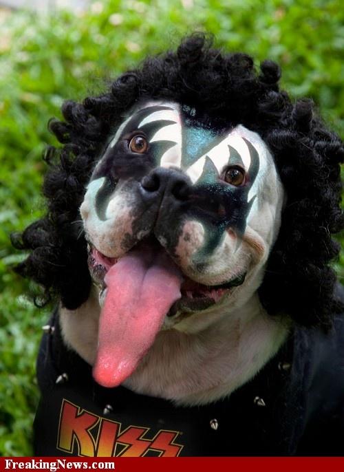 Dog Who Looks Like Gene Simmons