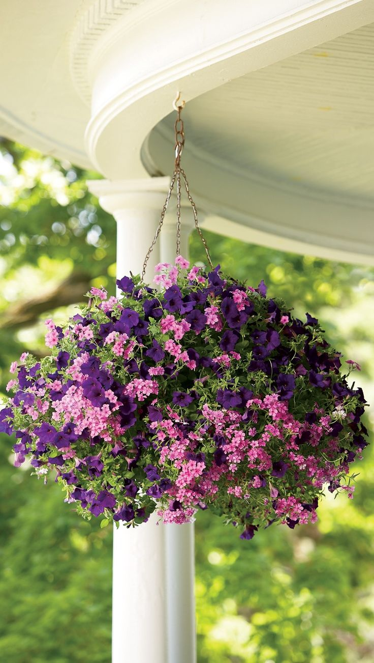 17 best images about hanging baskets on pinterest window for Front porch hanging plants