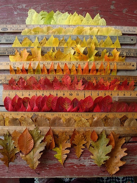 """Autumnal. Gave me a great idea,  gather many types of leaves and make a """"portrait"""" to hang on my wall. Written as to not forget."""