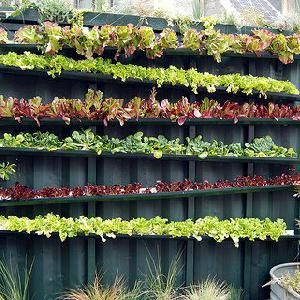 Intensive Vegetable Gardening In Small Spaces, rain gutters hung as lettuce planters