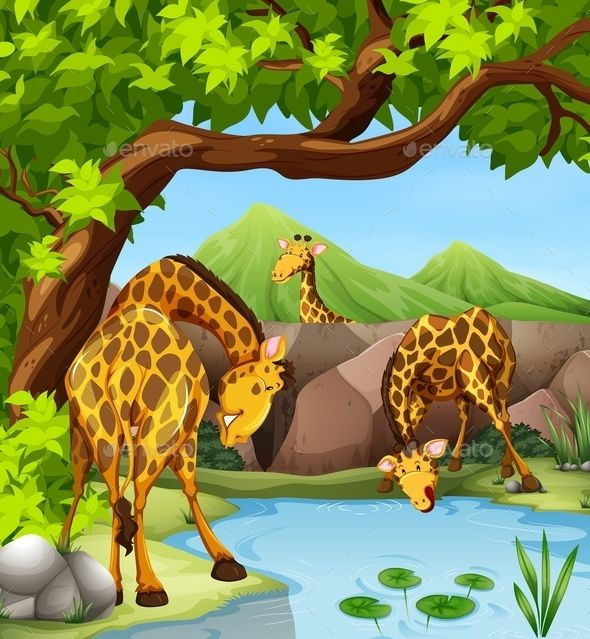 Giraffe Drinking Water from the Pond