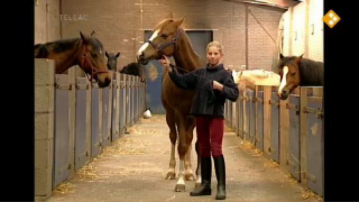 Thema: Natuur. In deze aflevering gaat het over het verzorgen en berijden van je pony. Najesta laat zien hoe je moet op- en afstijgen, hoe je de teugels moet vasthouden en wat stap, draf en galop is. Hoe verzorg je een paard?