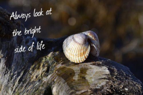 Always look at the bright side of life (Foto Seljordslia)