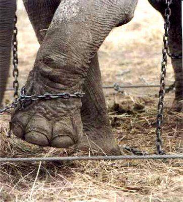 El elefante encadenado de Jorge Bucay - El Blog Alternativo