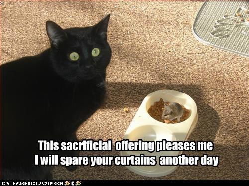 Yeah, I've seen this one from my cat.