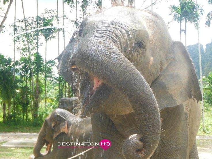 Happy Thai Elephants
