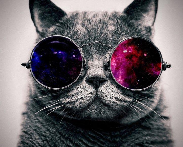 Whatsapp Profil Resimleri Anlamli Profil Resmi Teknocard Space Cat Resim Kedi