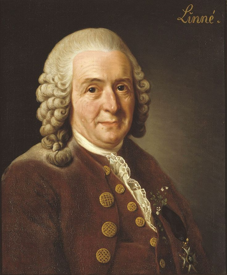 TIL when Carl Linnaeus was in Hamburg the mayor proudly showed him the remains of a seven-headed hydra. Linnaeus found out the remains were fake and made it public. As a result Linnaeus was forced to leave Hamburg immediately as he crushed the mayors dream of selling the hydra for a large sum.