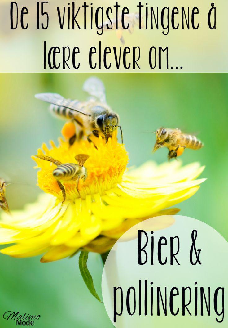 Bier og pollinering - 15 ting alle bør vite! Tips til hvordan man kan lære barn om emnet, samt hva man kan gjøre for å redde biene. Kombiner naturfag, norsk, engelsk og kunst & håndverk!