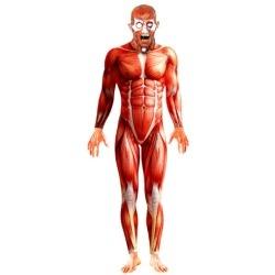 Anatomy Man Male Costume www.grabevery.com
