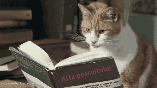 Imagini ,miscatoare,Gifuri,cu sclipici,stralucesc,blog,informatii,urari,mesaje,felicitari zi nastere: Arta pescuitului / lectura pentru pisici (imagini ...