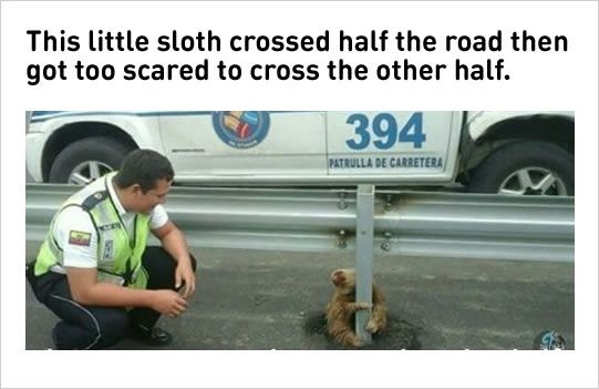 adorable sloth pictures
