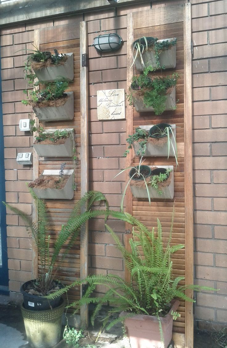 Old conveyor belt buckets and louvre doors saved from my kitchen taken out twenty years ago make this vertical garden. The buckets were simply wired to the doors after drainage holes were drilled. The whole assembly was then leaned up against the wall. Its looking a lot more lush now that the plants have been growing for 4 months. Thanks to my son for helping to execute my idea.