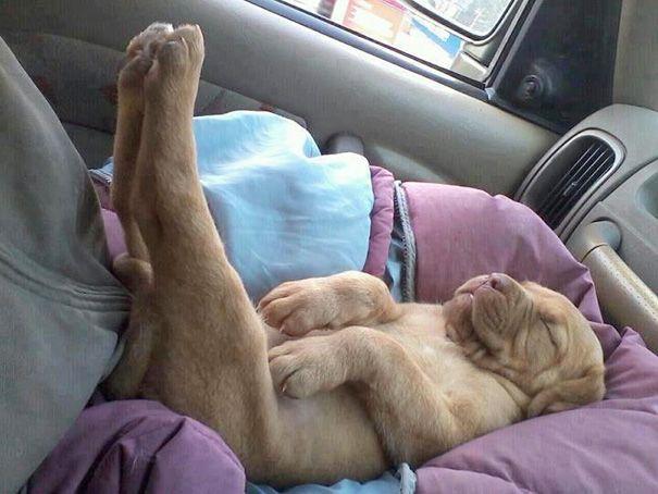 cachorros-perro-durmiendo (14)