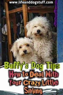 How to Deal With Your Crazy Little Sibling – Buffy's Dog Tips | Life and Dog Stu…