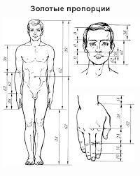Картинки по запросу пропорции тела рисунок
