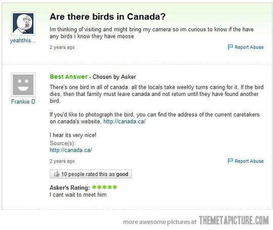 Are there birds in Canada?