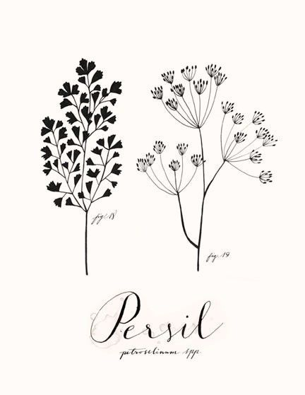 """Persil"" // parsley. Art print by Eva Juliet."