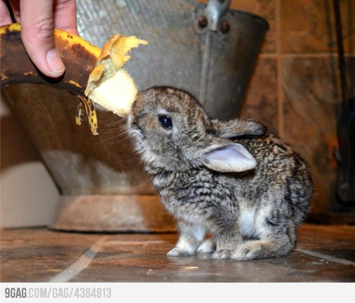 Can I have it?Bunnies Eating, Baby Bunnies, Bananas Bunnies, Awesome Bunnies, Bunnies Lovin, Baby Animal, Baby Bananas, Haz Bununu, Bunnies Rabbit