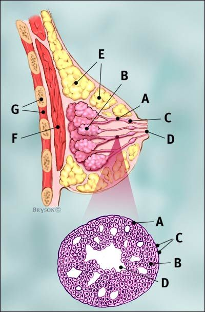 Not all breast cancers are the same. Breast cancers are categorized based on the type of tissue where the cancer begins. https://www.everydayhealth.com/breast-cancer/guide/types/?utm_content=buffer12af2&utm_medium=social&utm_source=pinterest.com&utm_campaign=buffer