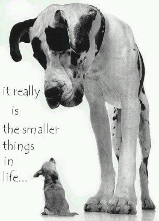 The smaller things...