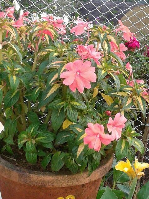 Flower garden kerala kerala pinterest gardens for Garden designs in kerala