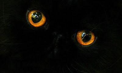 Gatitos: imágenes, informacion y cuidados: Imágenes de Gatitos: ojos  [31-10-16]