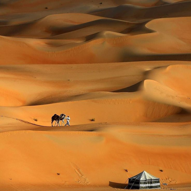 A man walks his camels across the Liwa desert west of Abu Dhabi during the 2016 Liwa Moreeb Dune Festival on January 5th 2016. The festival which attracts participants from around the Gulf region includes a variety of races (cars bikes falcons camels and horses) and other activities aimed at promoting the country's culture. Credit: AFP/ Karim Sahib #MoreebDune #LIWA #gulf #desert by theeconomist