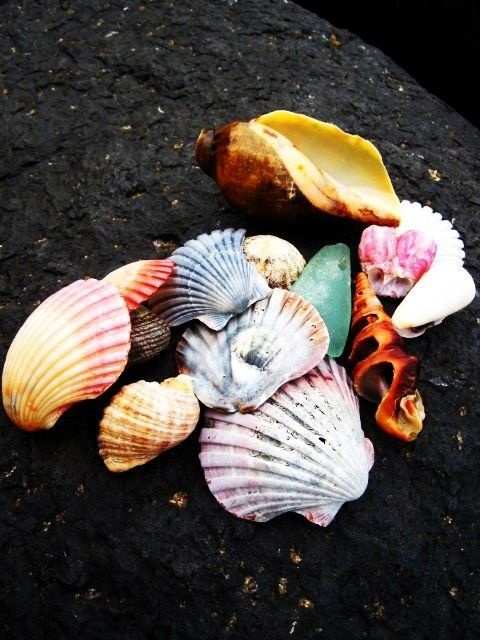 shells from burleigh heads