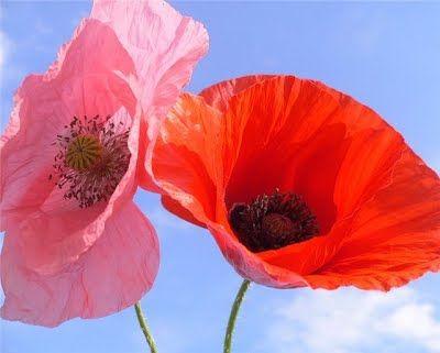 Значения цветов - Флористика