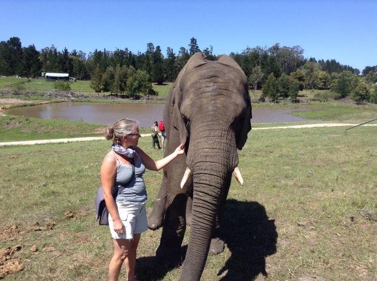 Mig og elefanten