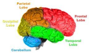 Physiological Effects of Pranayam