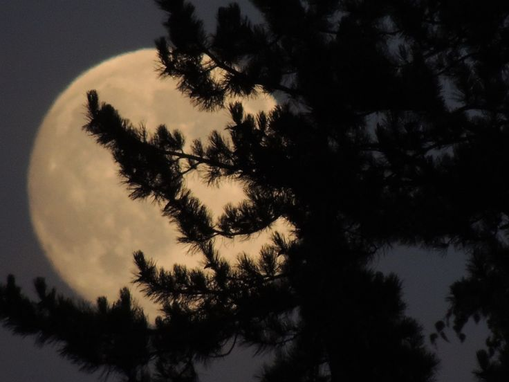 Super moon rising, August 9th