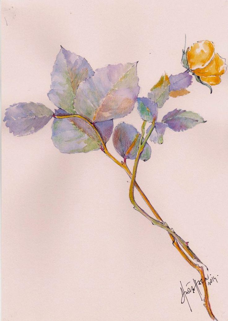 ..Nyílik  még  a  sárga  rózsa.....