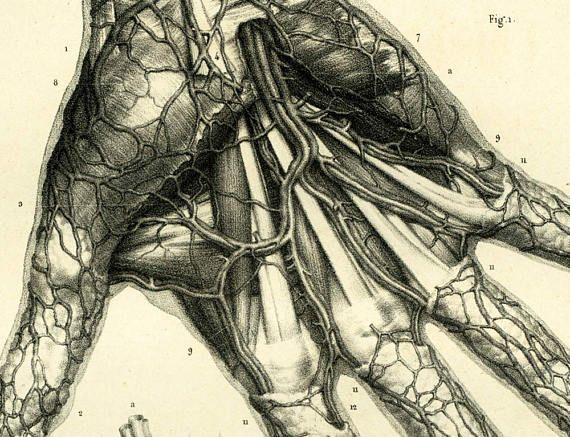 """Hand Surgery. Circulatory system. Medical poster collectors, cabinet of curiosities. Authentic Large size lithograph.  From the """"Traité complet d'Anatomie"""" published by the... #bourgery #veins"""