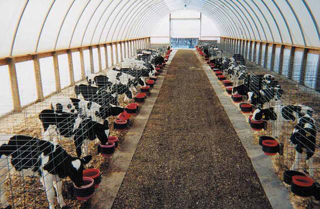 individual calf pens-need 1 row of 12 = 48' long x 6' deep + 4' walkway = 480 sq. ft out of bedpack space.