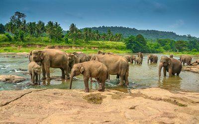 Scarica sfondi palme, un branco di elefanti, gli elefanti, elefante, africa, lago
