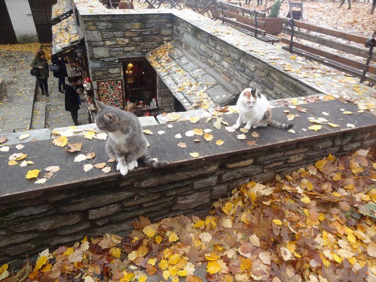 Cats of Makrinitsa Pelion -Thessaly https://flic.kr/p/pNV7EM |