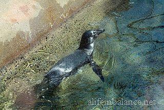 Adventure Aquarium Fun in Camden, New Jersey