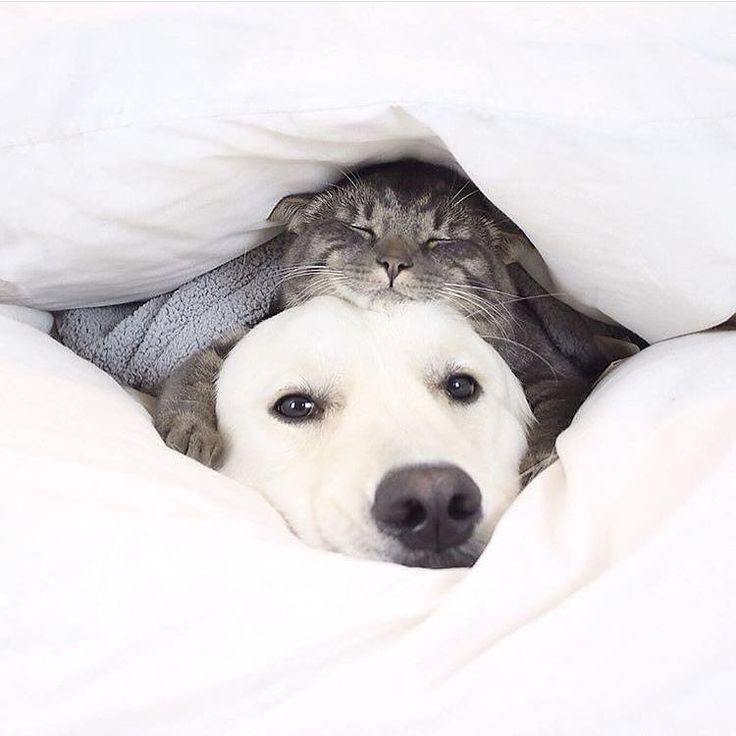 153 besten Hunde Bilder auf Pinterest