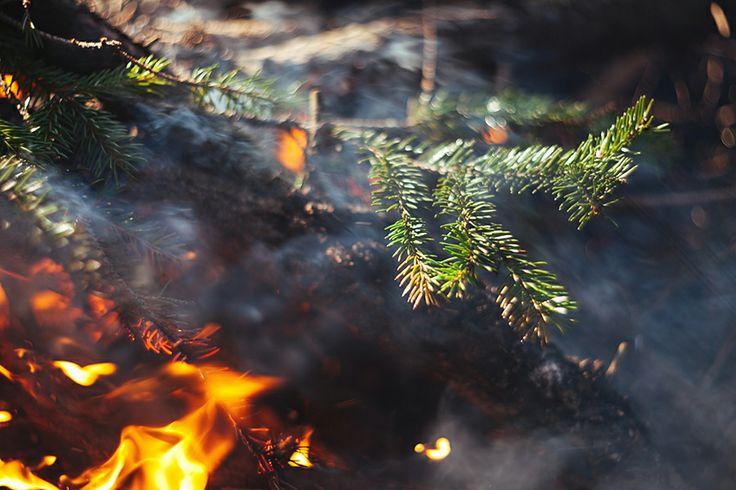 лето весна лес summer spring forest tree костер огонь fire