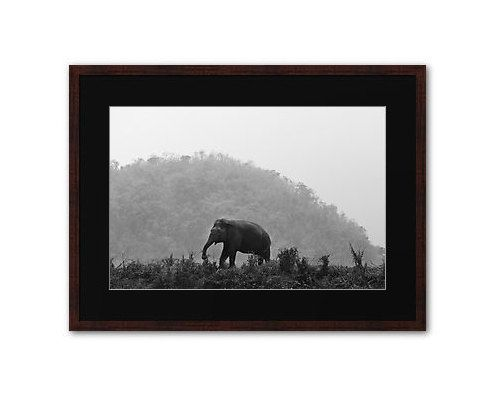 A Place For One. Fine art photographic print. Elephant. Archival quality print by Life In Fine Art