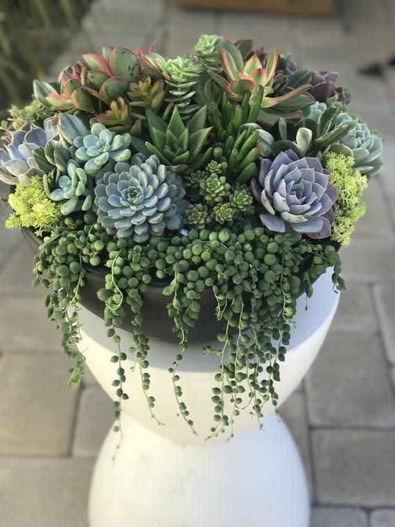Succulent Centerpiece Housewarming Birthday Gift Large Etsy With Images Succulent Centerpieces Succulent Arrangements Succulents
