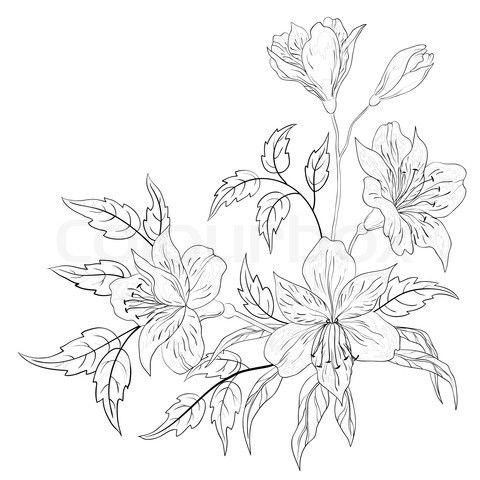 alsromeria drawings | Stock image of 'Flower alstroemeria, contour'