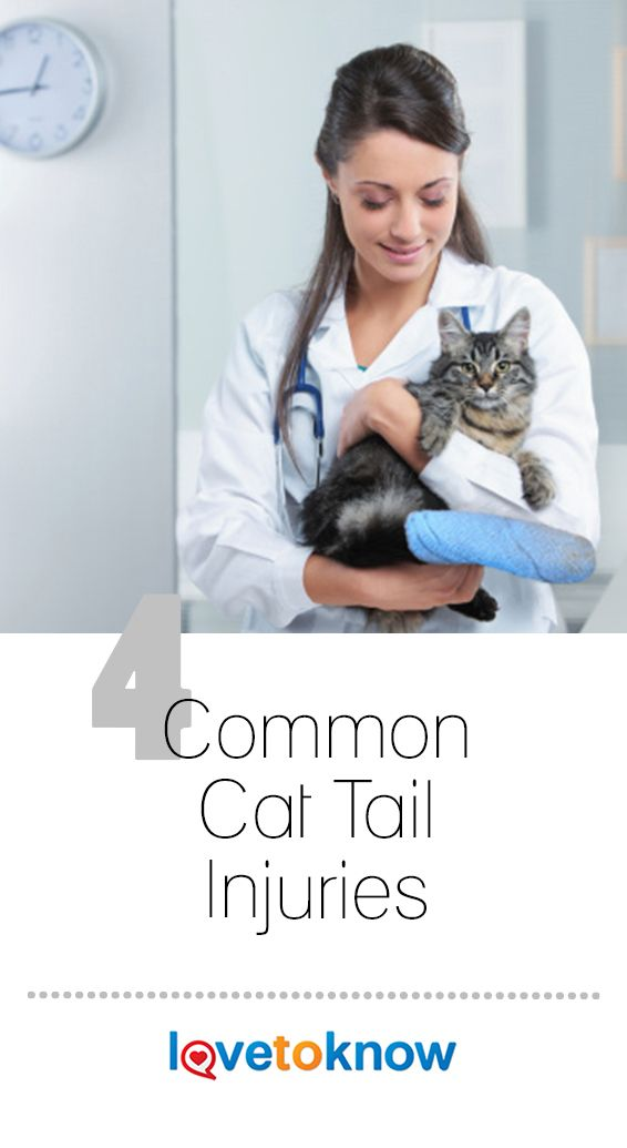 4 Common Cat Tail Injuries Lovetoknow Cats Cat Tail Cat Wounds