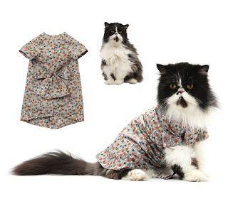 cara membuat baju kucing dari kain flanel,kucing sederhana,makanan kucing sendiri,kucing kampung sendiri,barbie sendiri,makanan kucing kering,cara membuat baju bayi,