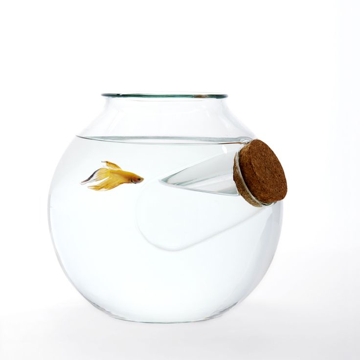 17 best images about aquariums fish bowls and fish tanks for Fish bowl rocks