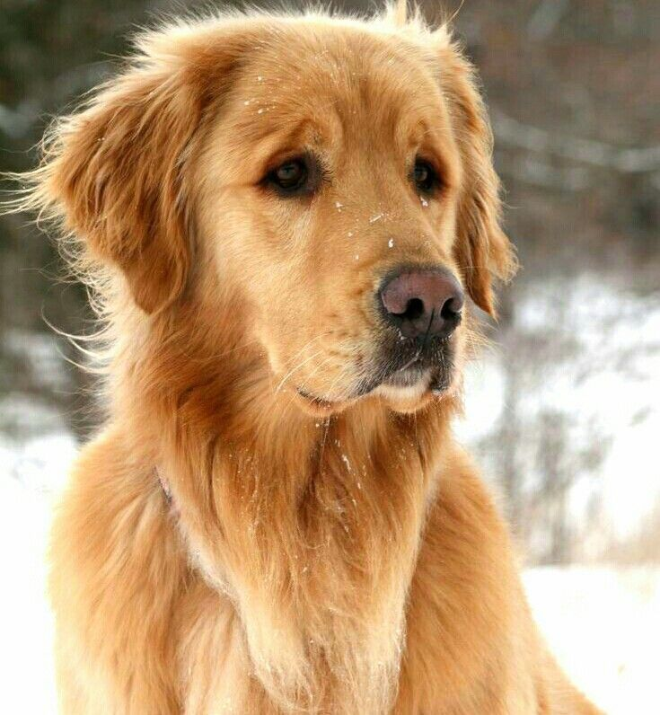 Helping your pet have an enjoyable grooming experience
