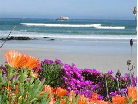 Wild flowers blooming on the West Coast